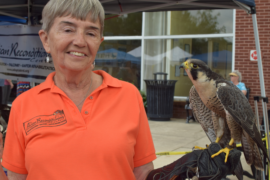 on Wysochansky holds up a Peregrine Falcon named Spartacus belonging to the Avian Reconditioning Center.