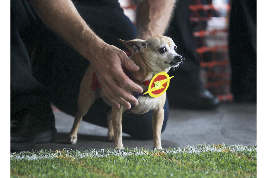 Dressed in a Flash costume, this little fella had his game face on as he was ready to smoke the competition.