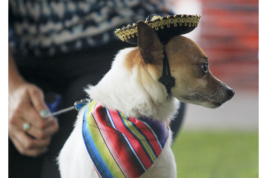 Many of the dogs dressed in little sombreros and other outfits as there was also a best dressed contest.