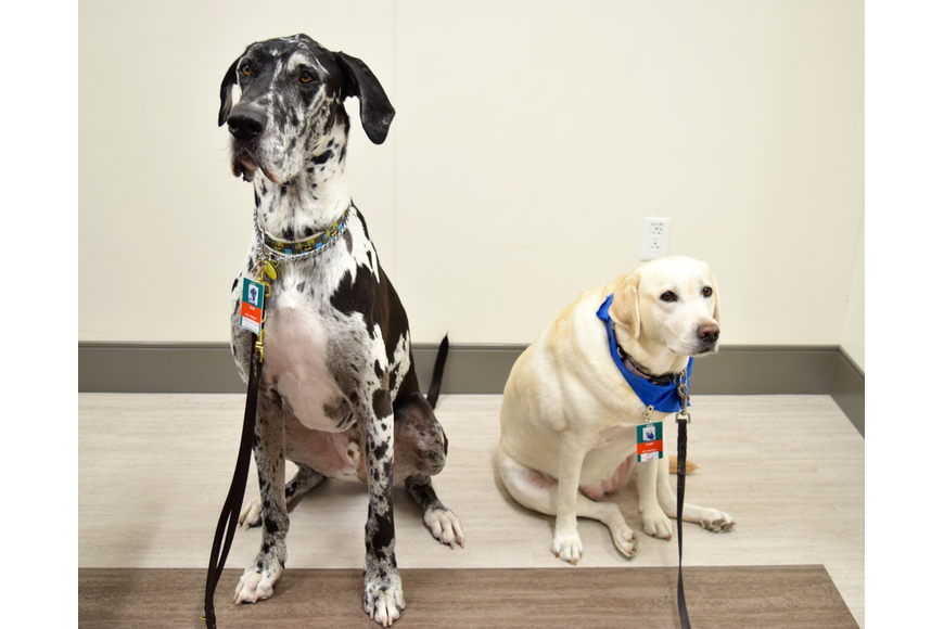 Zeus and Flair are part of Orlando Health's pet therapy program.