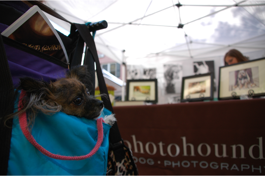 Photo by: Isaac Babcock - Dogs took to Park Avenue's brick roadway during Winter Park's seventh annual Doggie Art Festival, which flooded the street with booths from artists in April.